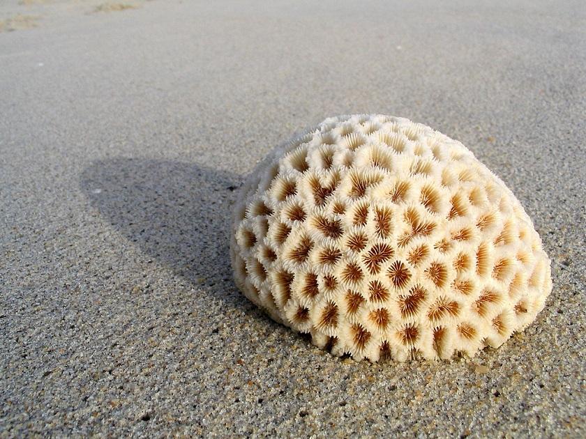 Что такое кораллы?. мир животных