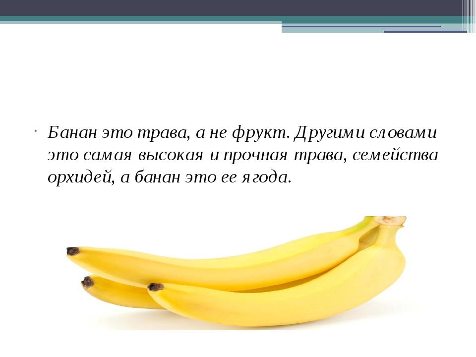 Банан (род) — википедия. что такое банан (род)