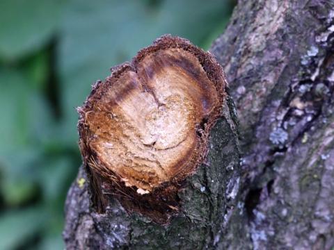 Пороки древесины -