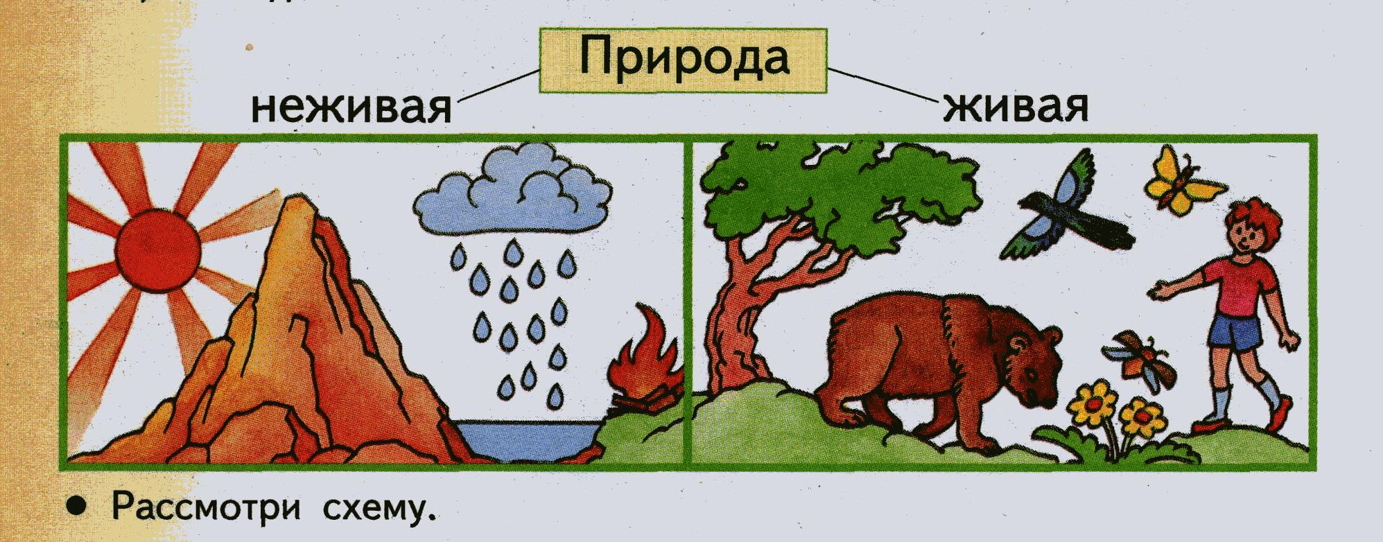 Что относится к живой природе: признаки живых организмов и их классификация