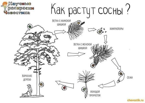Стимулятор роста растений «проросток» — инструкция по применению