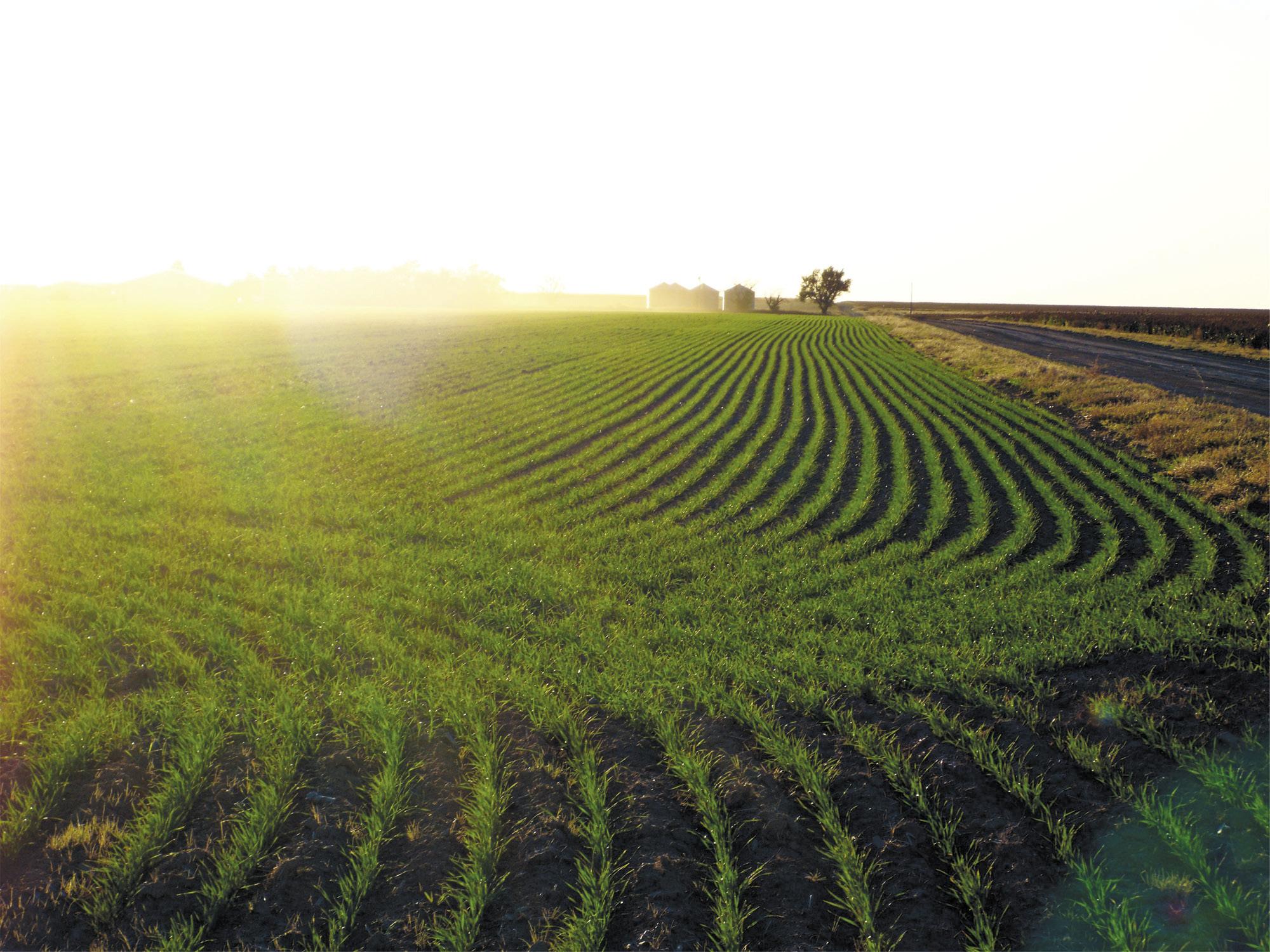 Органическое земледелие на даче: основные принципы, что это такое, как начать с нуля