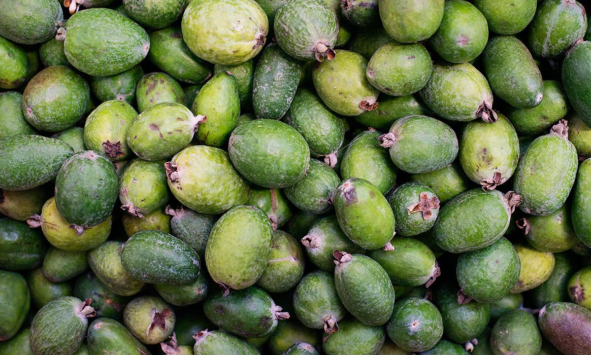 Фейхоа – полезные свойства и противопоказания для женщин и мужчин, химический состав, как выбрать и употреблять в пищу, рецепты блюд и напитков