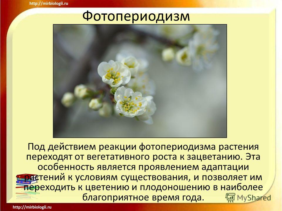 Фотопериодизм - photoperiodism - qwe.wiki