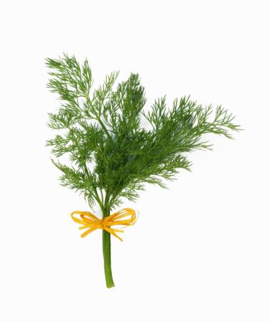 Укроп – полезные свойства, фото, популярные сорта, применение семян и зелени