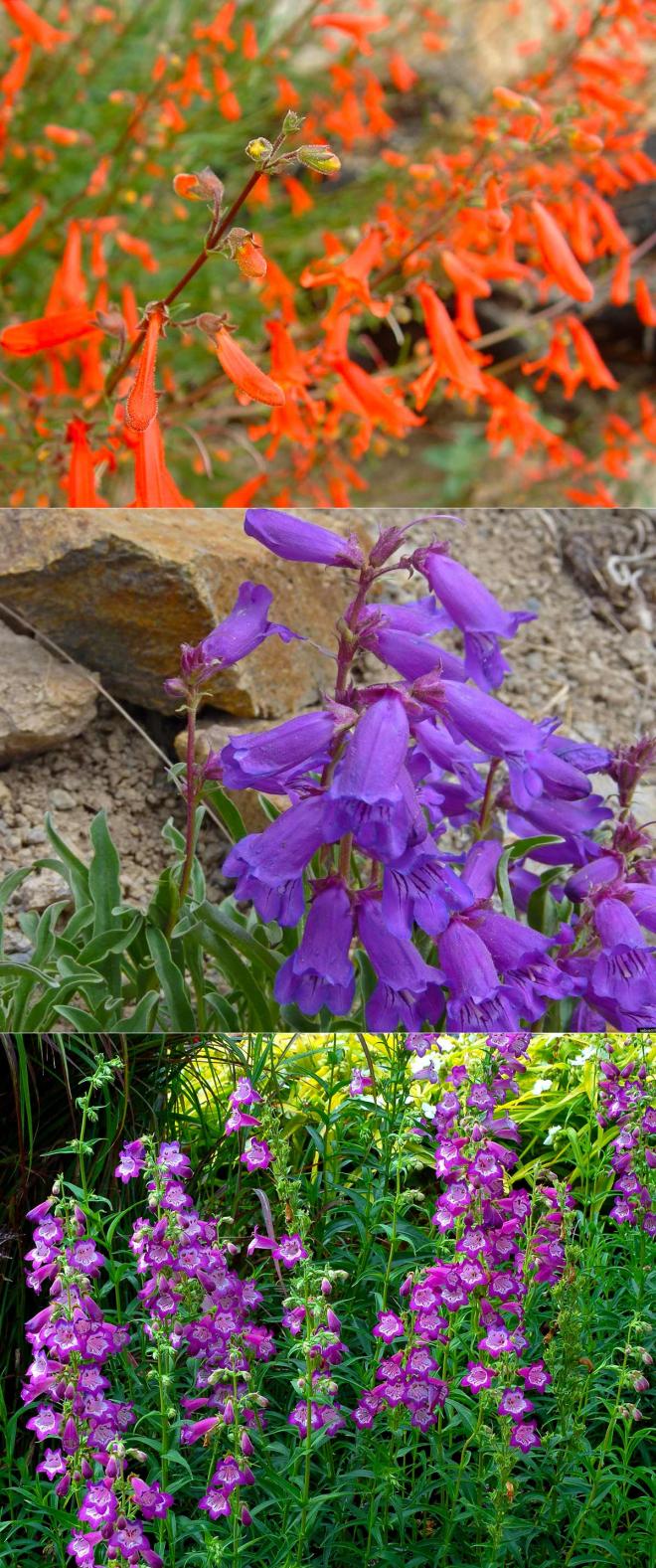 Дрок красильный: свойства иприменение | лекарственные растения (травник)