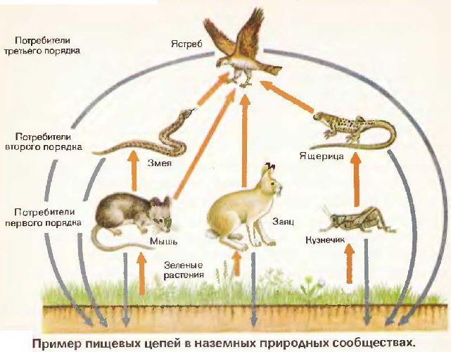 Значение бактерий-редуцентов в природе