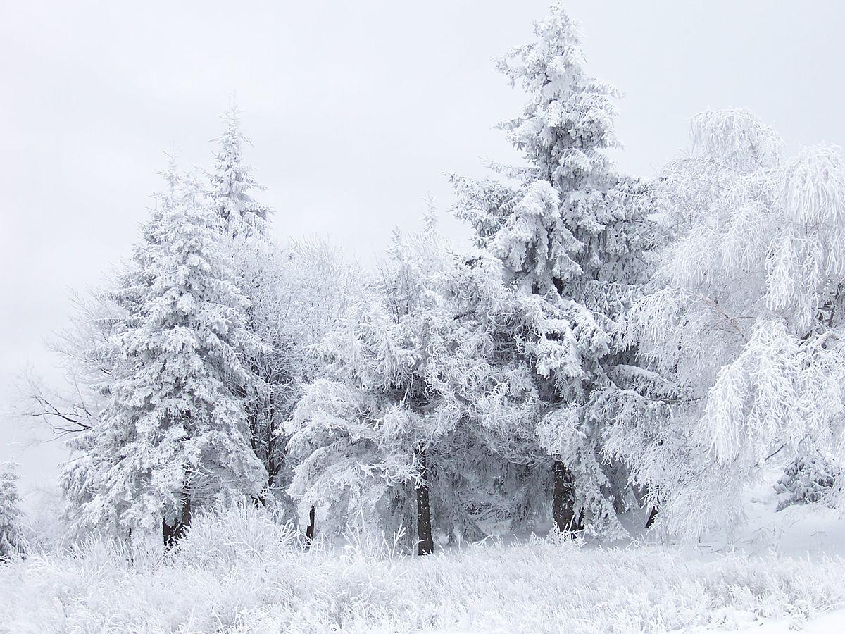 Снег: что это такое, как образуется, почему белый, откуда берется, фото и видео  - «как и почему»