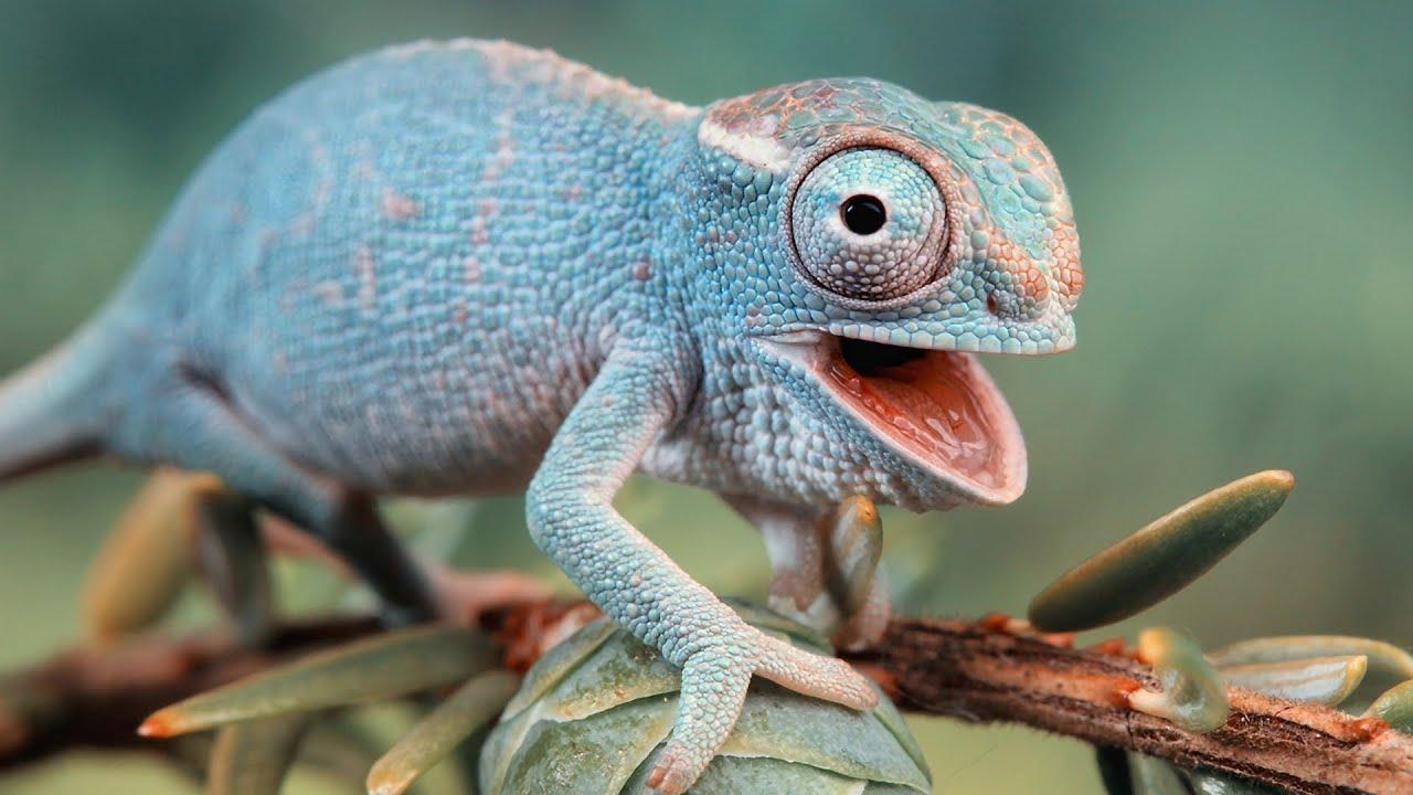 Класс пресмыкающиеся (рептилии). общая характеристика, строение