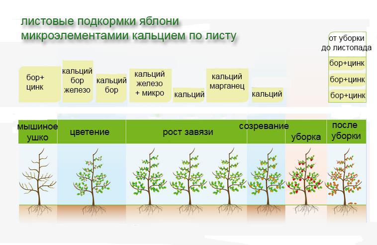 Вегетация растений - что это такое, сроки, в какое время начинать опрыскивание и температура