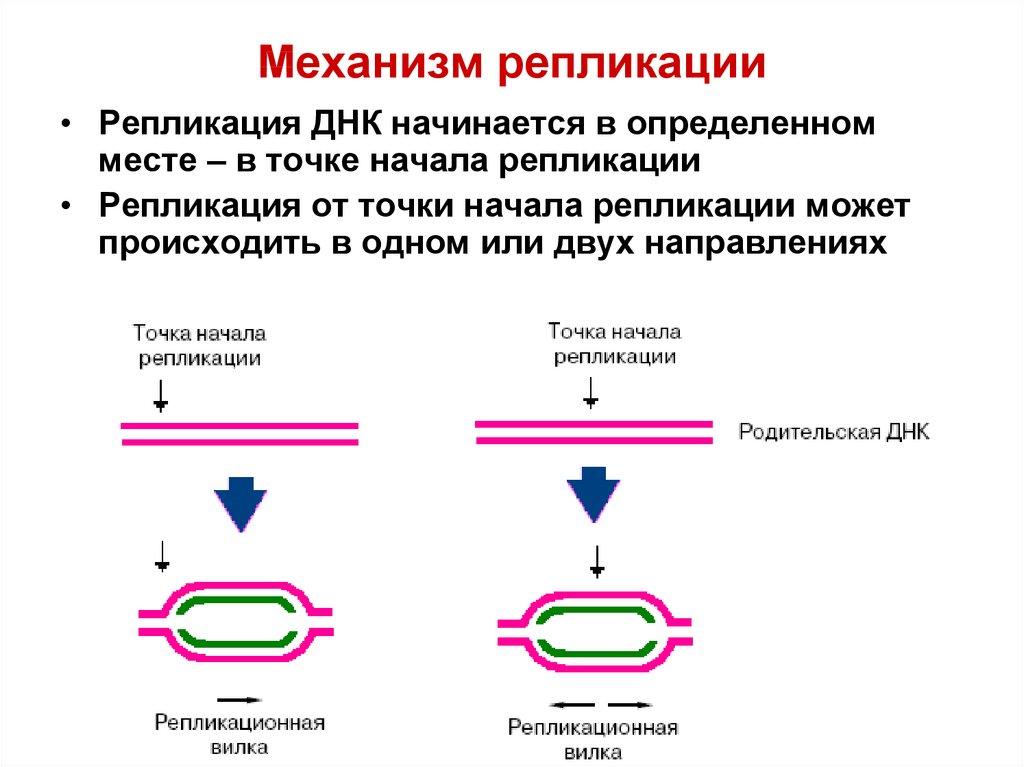 Репликация (биология)
