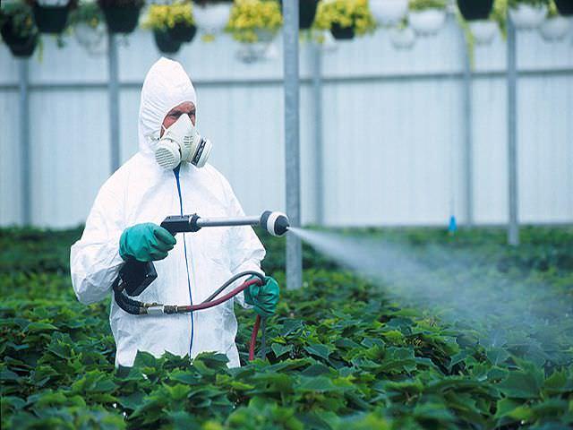 Лечащий фунгицид | справочник пестициды.ru
