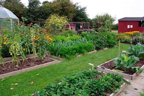 Как организовать севооборот в огороде?