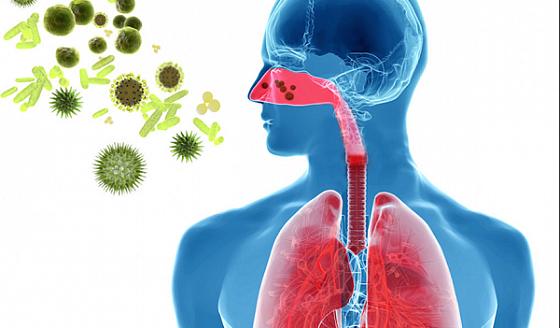 Мокрота в легких: как возникает, когда норма и признак заболевания, диагностика, терапия