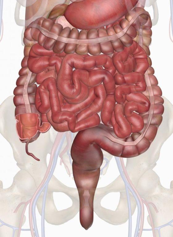Отделы кишечника - помощь доктора