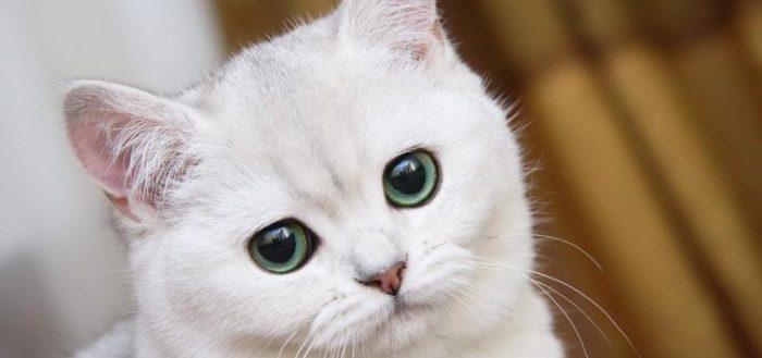 Советы по правильному использованию фурминатора для кошек