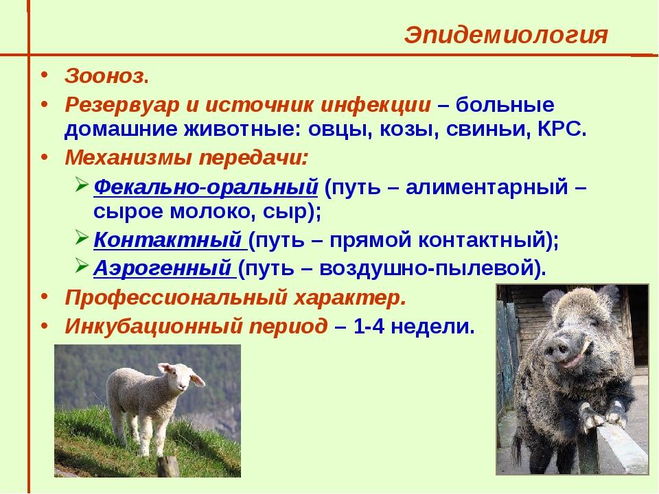 Зоонозные заболевания