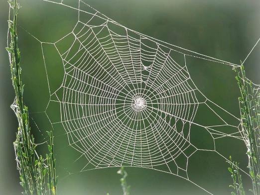 Паутина (телесериал) — википедия. что такое паутина (телесериал)