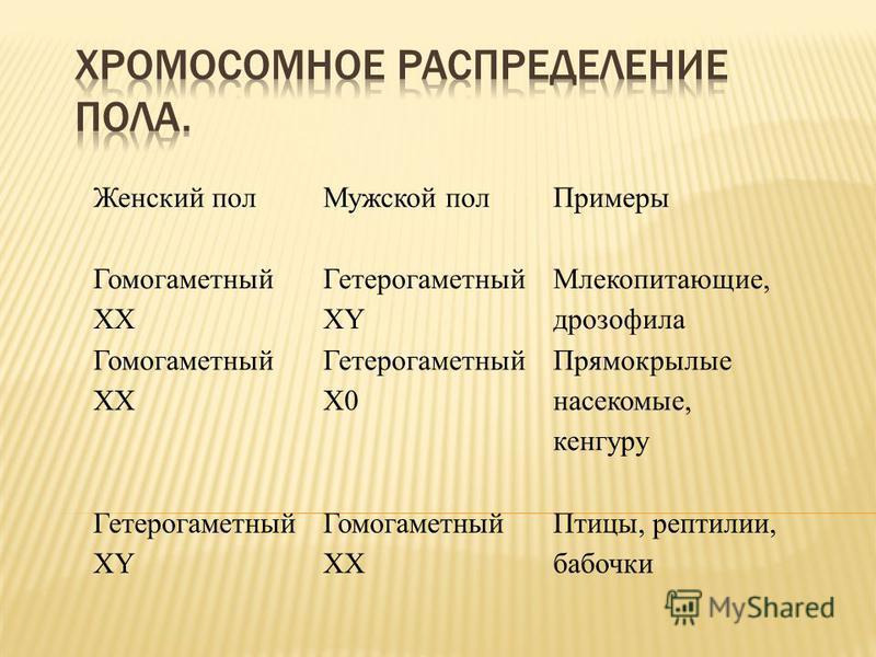 Что такое гомогаметный пол?