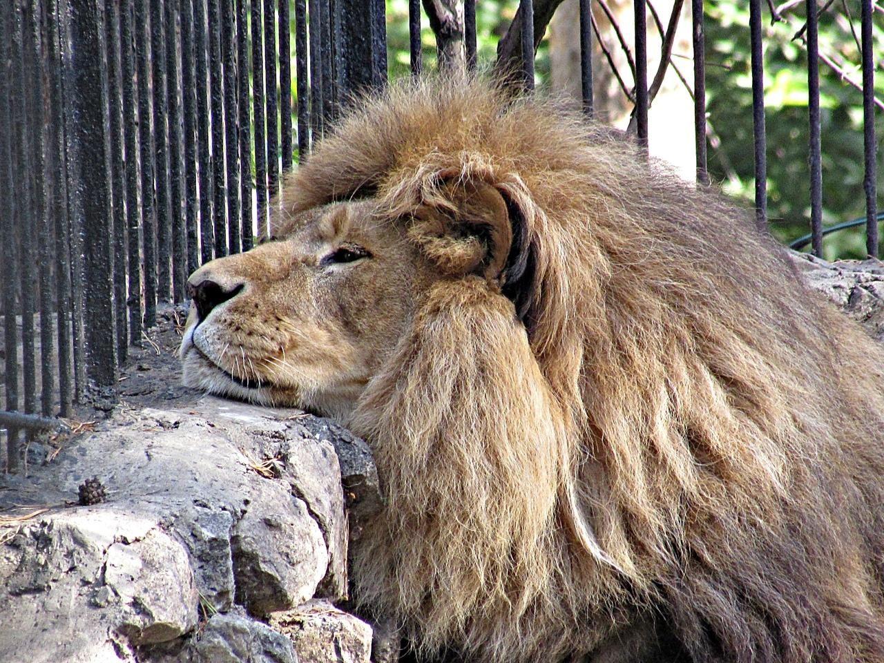 Ленинградский зоопарк — википедия. что такое ленинградский зоопарк