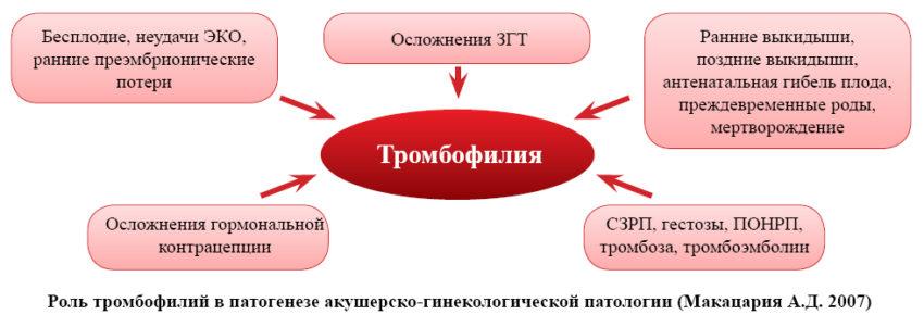 Лечение тромбофилии - методы и рекомендации, профилактика