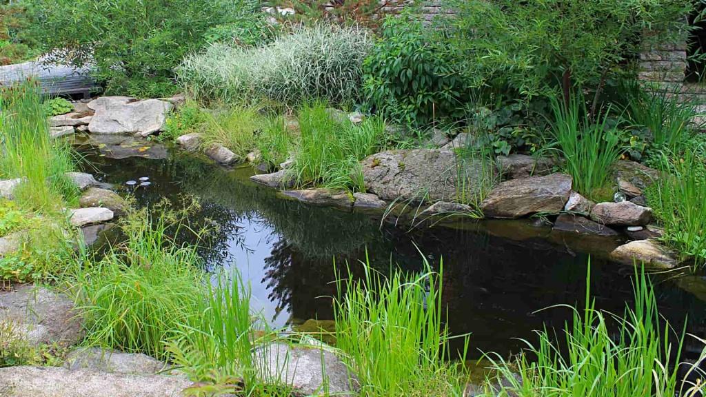 Чем пруд отличается от озера: особенности и отличия - всё просто