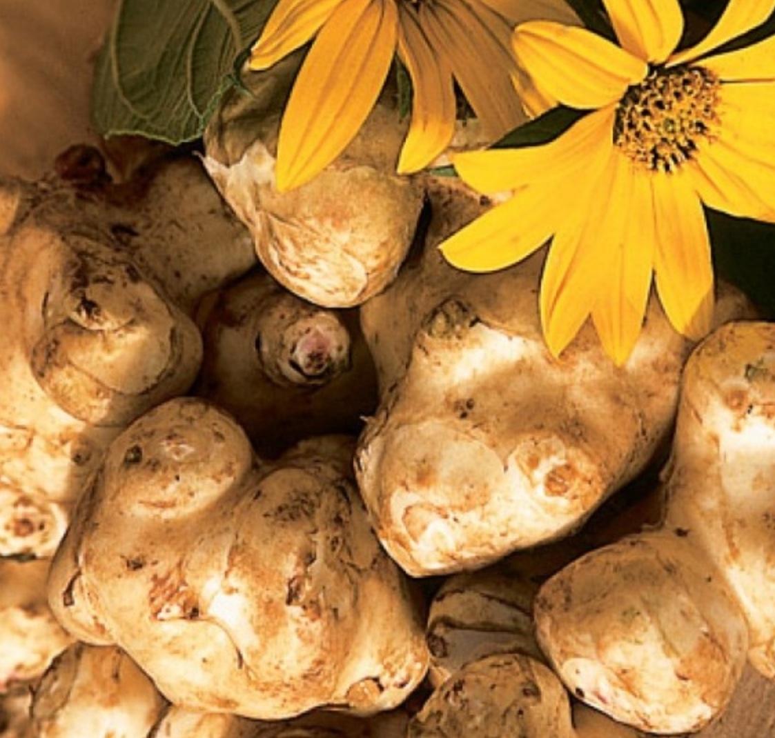 Топинамбур – полезные свойства, противопоказания, рецепты и применение – 4 сезона огородника