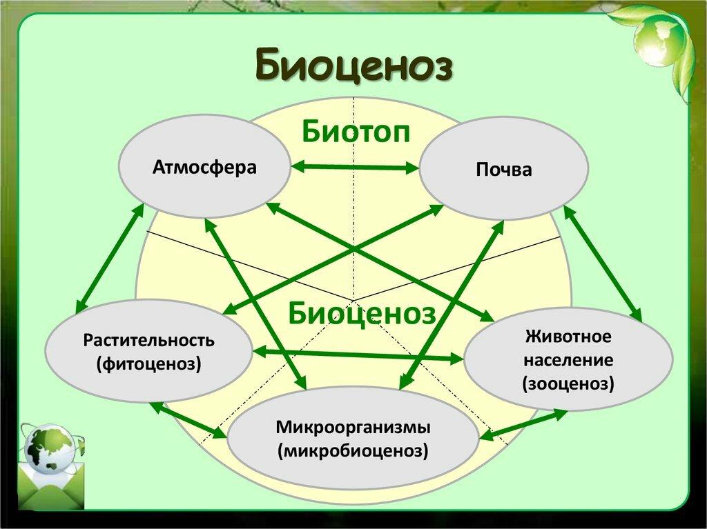 Биоценоз - определение, структура, состав, организмы, примеры и роль — природа мира