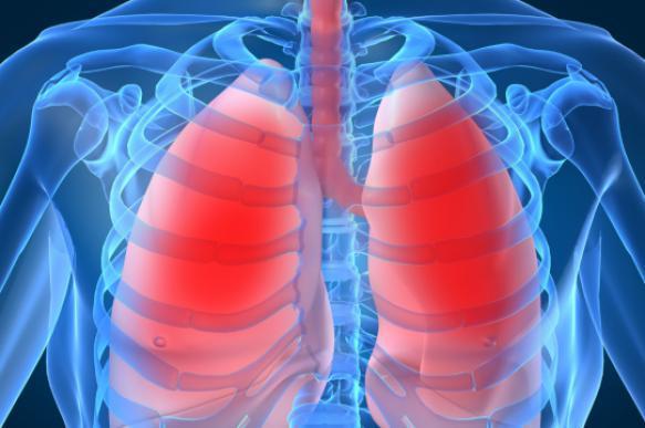 Лёгкие — википедия. что такое лёгкие