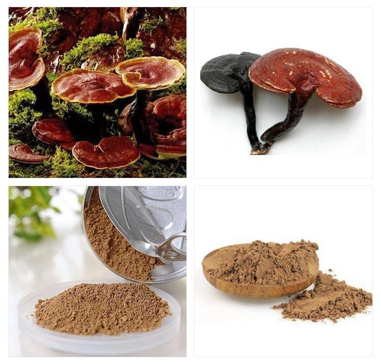 Гриб рейши - фото, лечебные свойства, применение гриба рейши в препаратах в капсулах