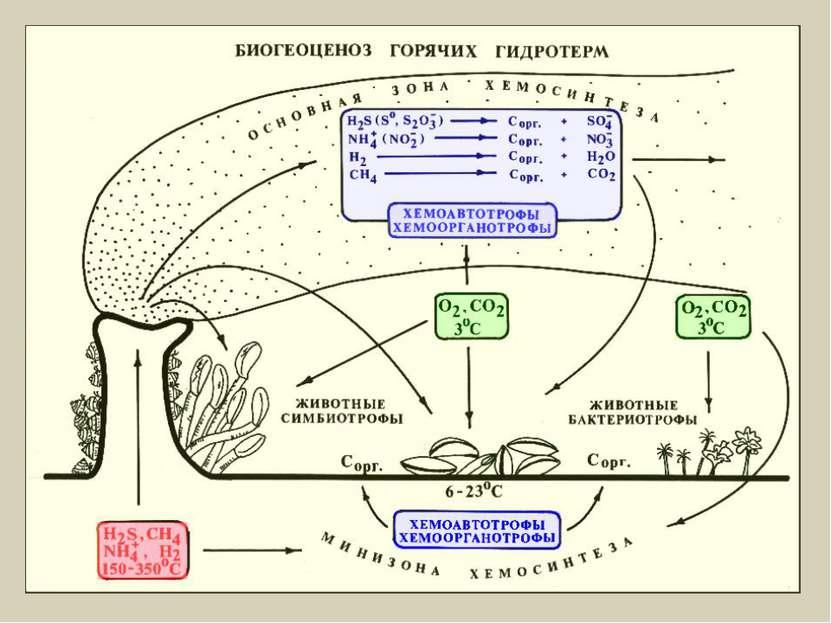 Хемосинтез
