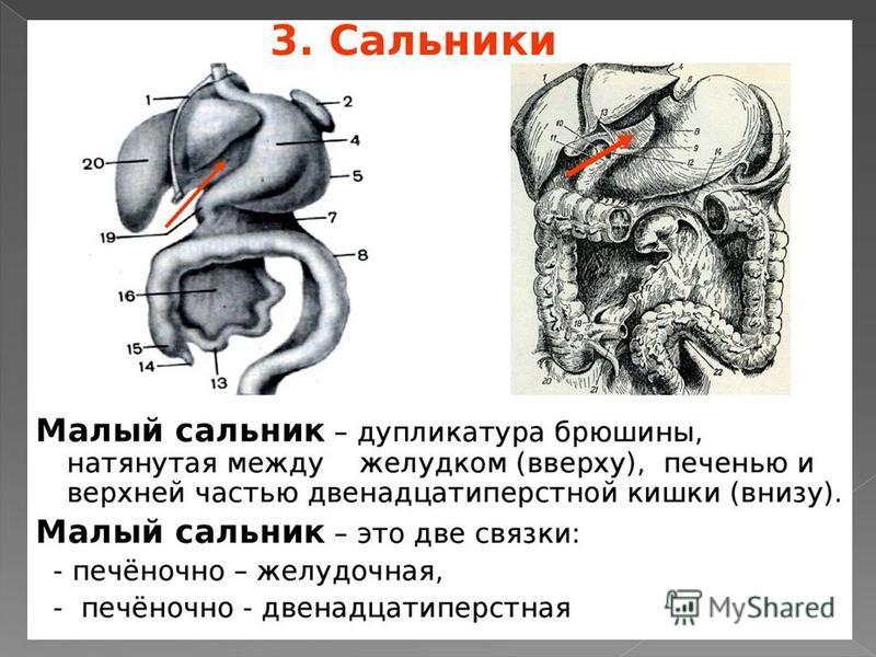 Что такое сальник в кишечнике