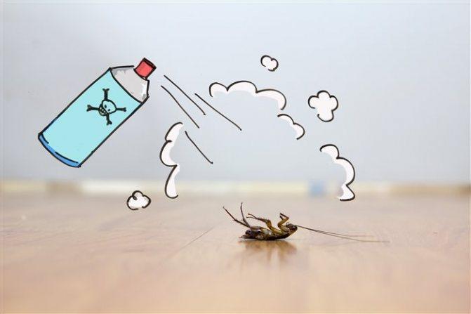 Тараканы: почему их называют стасиками, и другие интересные факты из их жизни   портал о борьбе с клопами, блохами, тараканами и другими вредителями тараканы: почему их называют стасиками, и другие интересные факты из их жизни