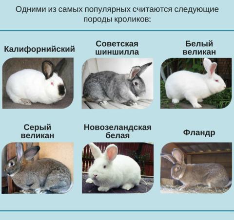 Породы кроликов: фото и описания пород