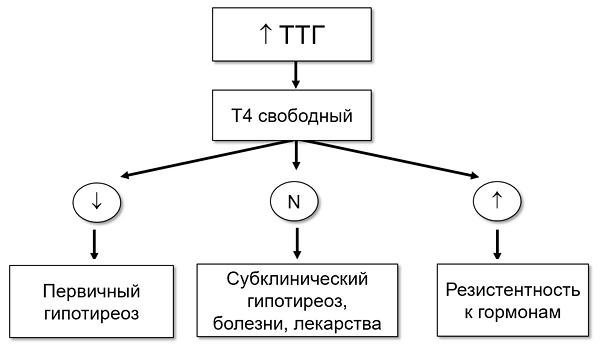 Субклинический гипотиреоз последствия - wikidiabethelp.ru