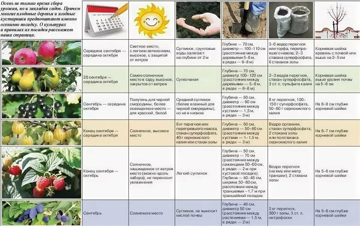 Период вегетации: описание понятия, определение у различных растений, сроки - sadovnikam.ru