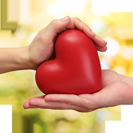 Сердце человека: строение, функции и заболевания