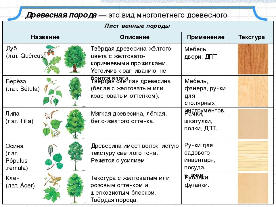 Физические свойства древесины -