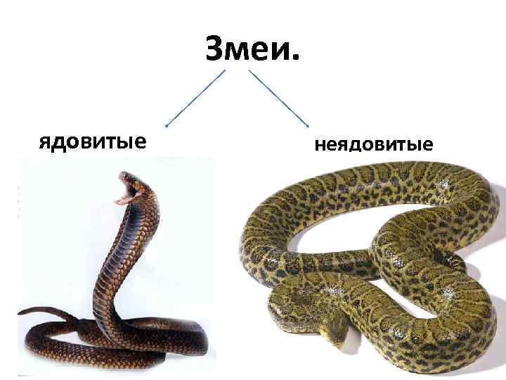 Змеи — виды и названия
