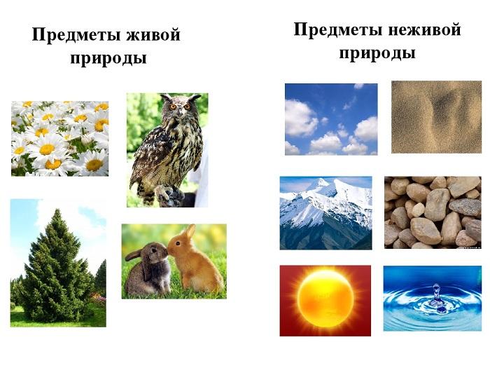 Что относится к неживой природе, а что - к живой?