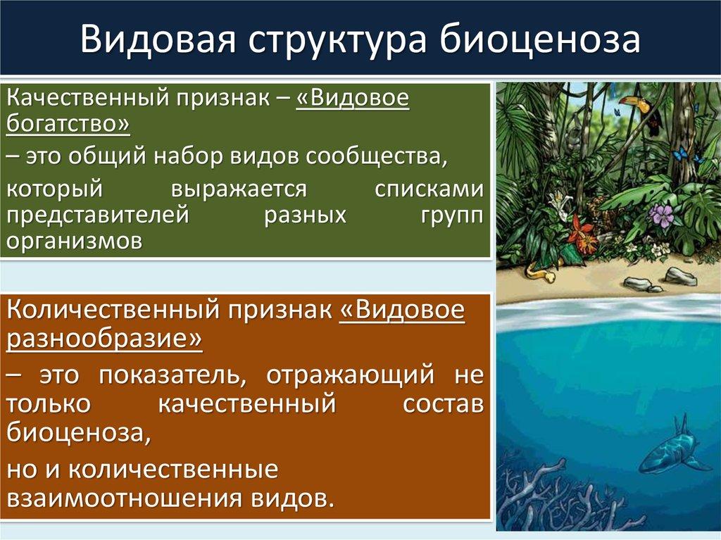 Биоценоз – что это в биологии: примеры искусственной и естественной классификации, горизонтальная структура | tvercult.ru