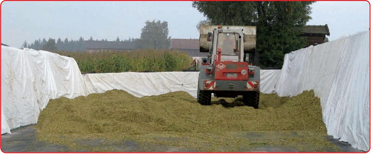 Силос для коров: что это и как правильно делать в домашних условиях, хранение