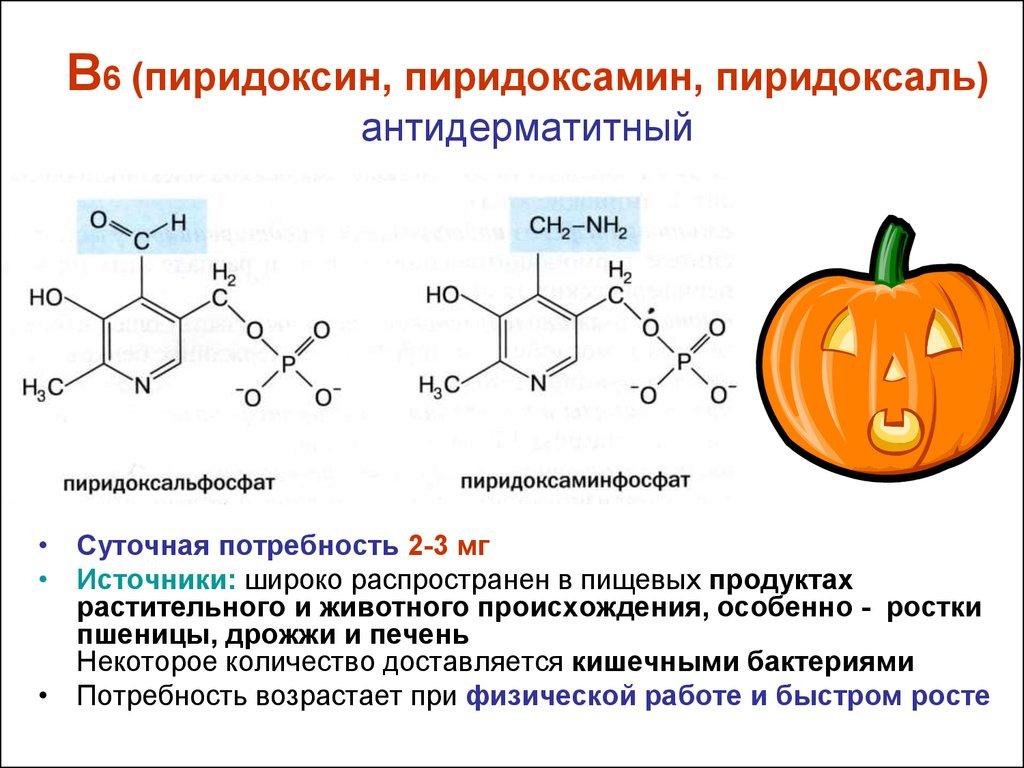 Пиридоксин — большая медицинская энциклопедия