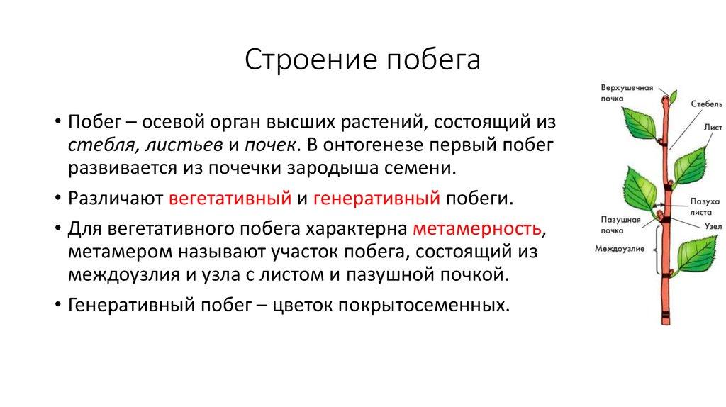 """Конспект """"побег (лист, стебель, почка)"""" - учительpro"""