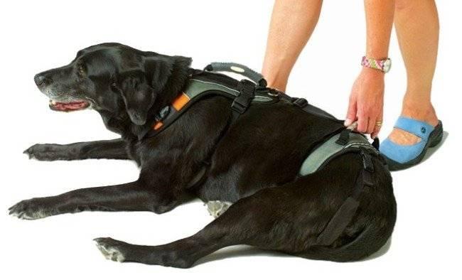 Шлейка для собак и щенков - как выбрать по материалу изготовления, размеру и стоимости