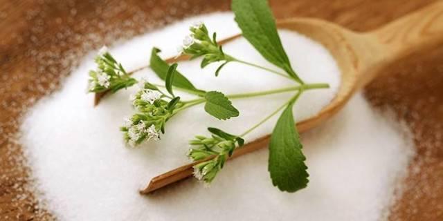 Стевия — лечебные свойства и противопоказания