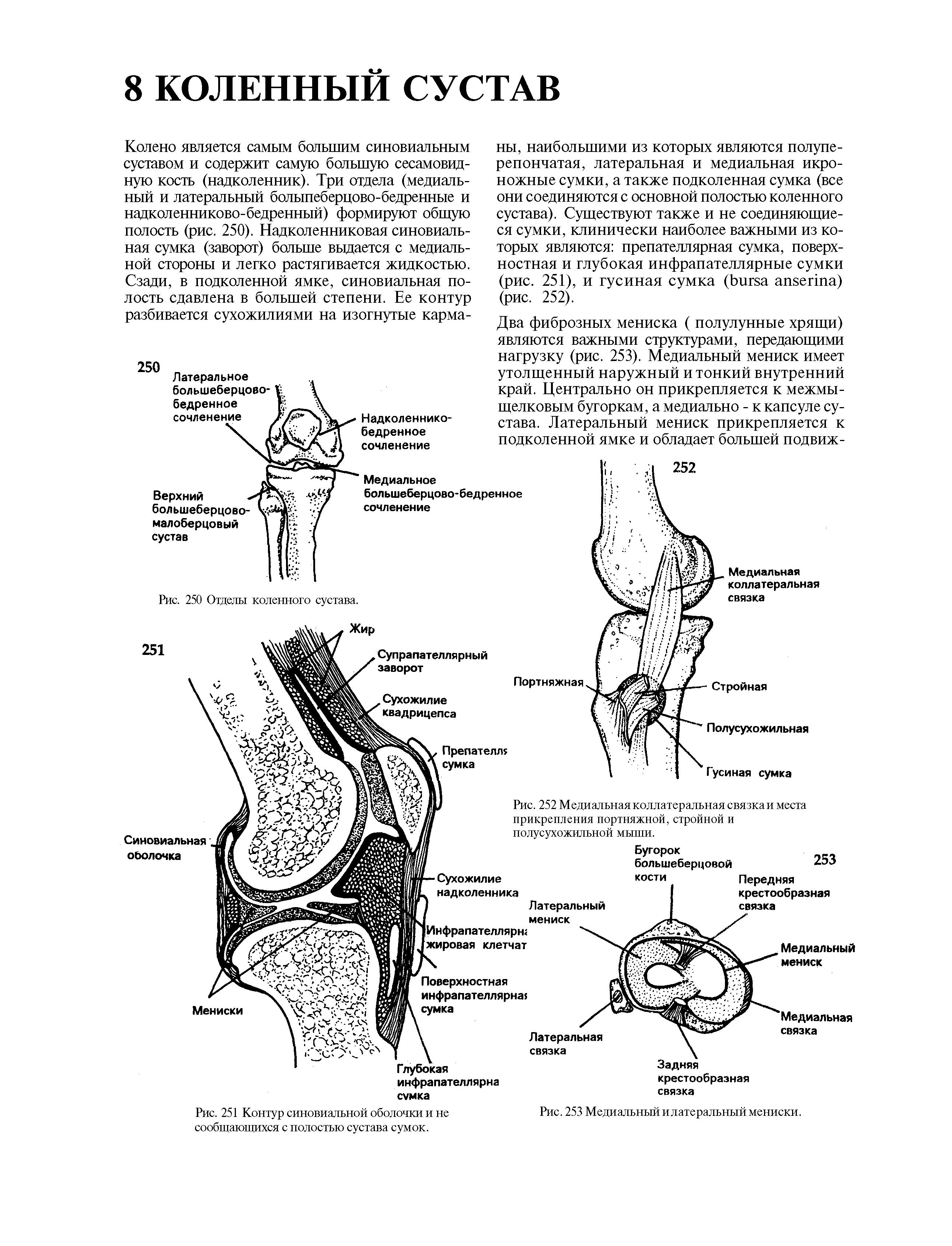 Протез синовиальной жидкости: препараты для подвижности суставов