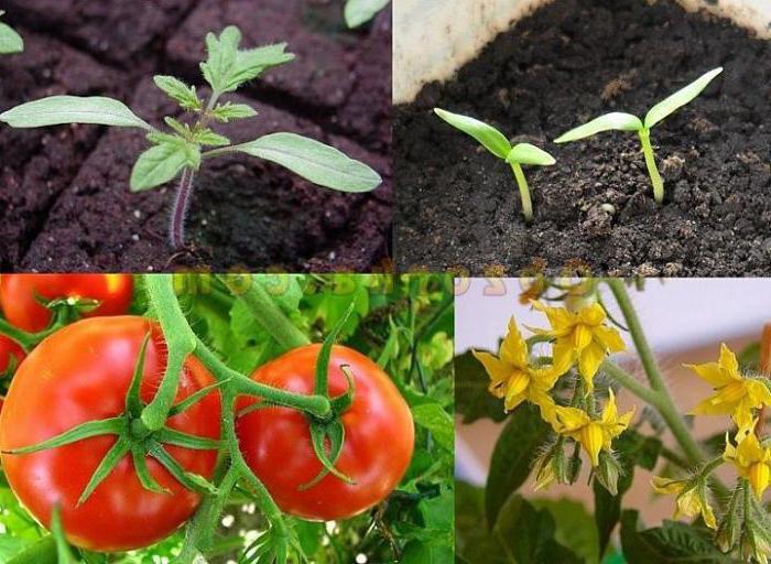 Вегетация растений – что это такое, когда начинается, как правильно определить и продлить период?