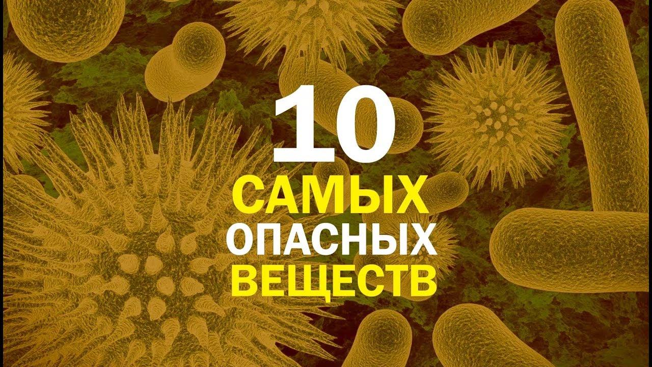 Как сделать яд из клещевины. интоксикация семенами клещевины (рицином): первые признаки и лечение - консультант кузнецов