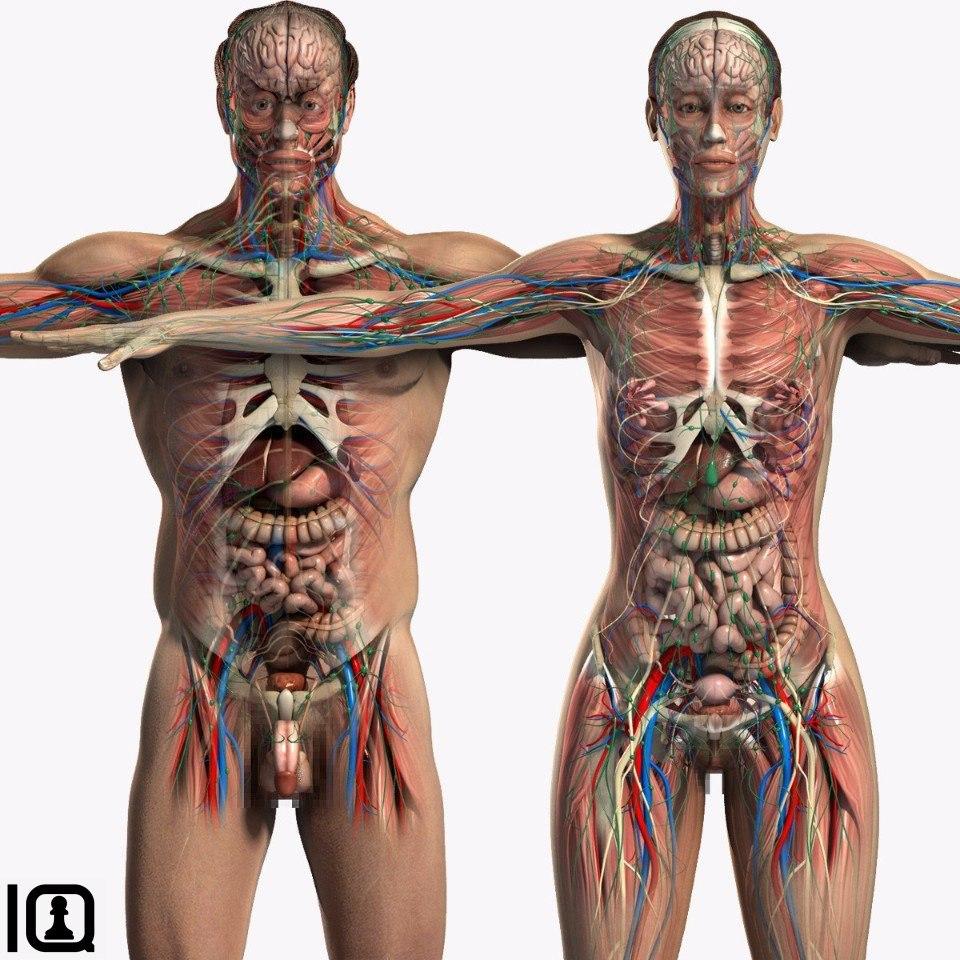 Пересборка наших границ: как табу, фотография ибиомедицинское знание создают людские тела — нож